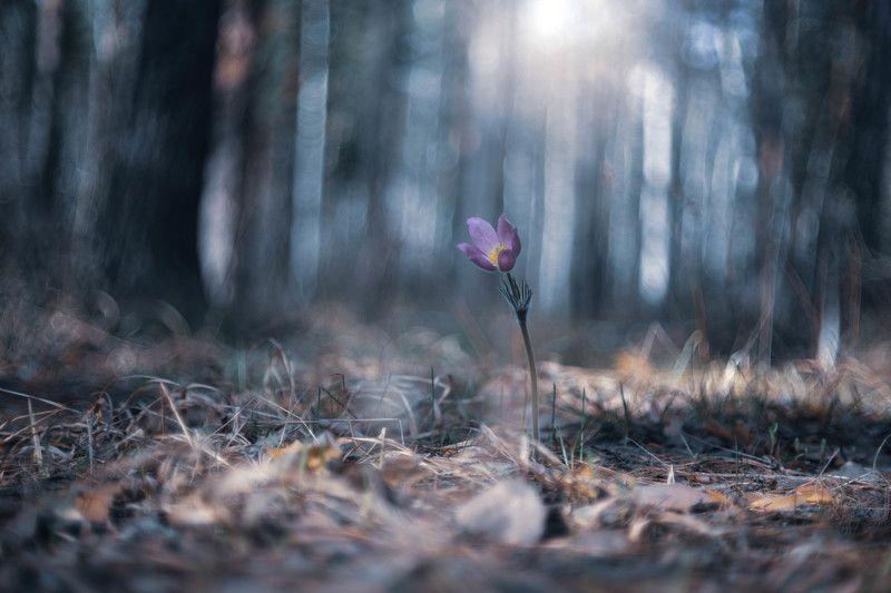 Одиноко одинокий одиночка… фото превью