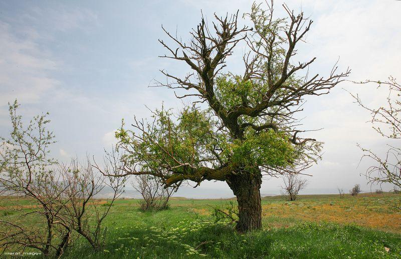 дерево,весна,утро,горы.дагестан ***photo preview
