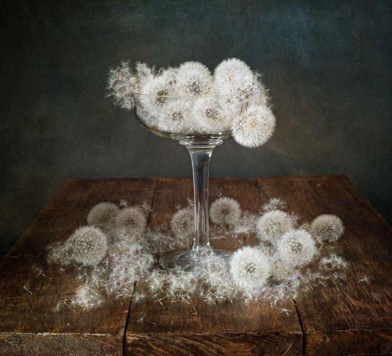 натюрморт, цветы, одуванчики Пушистикиphoto preview