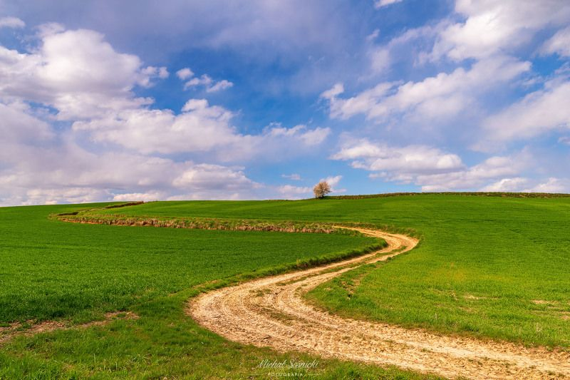 #poland #ponidzie #spring #layers #best #green #amazing #nature #benro #benq #pentax #tree #road Winding road...photo preview