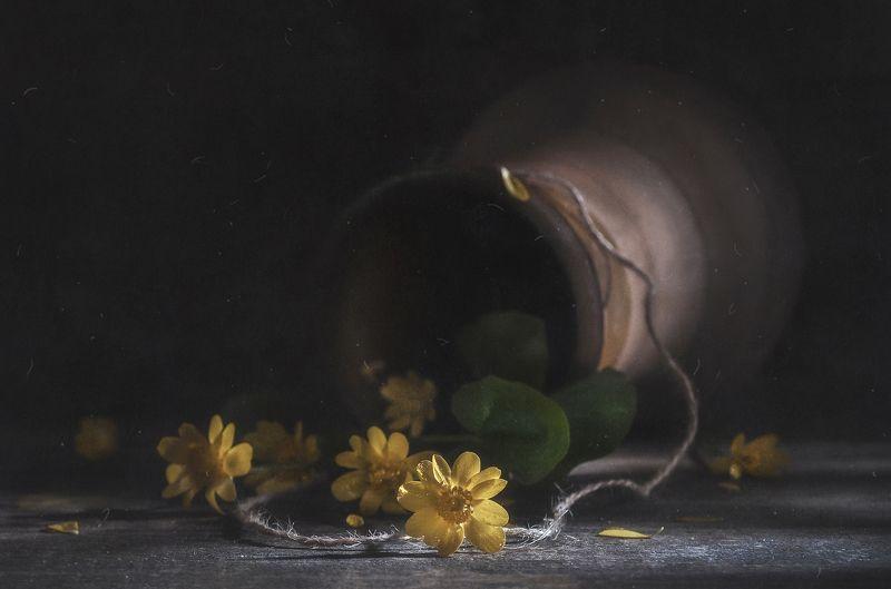 крынка,цветочки,деревенский,старое,тёмный,пыль Лежат цветочки на столе...photo preview