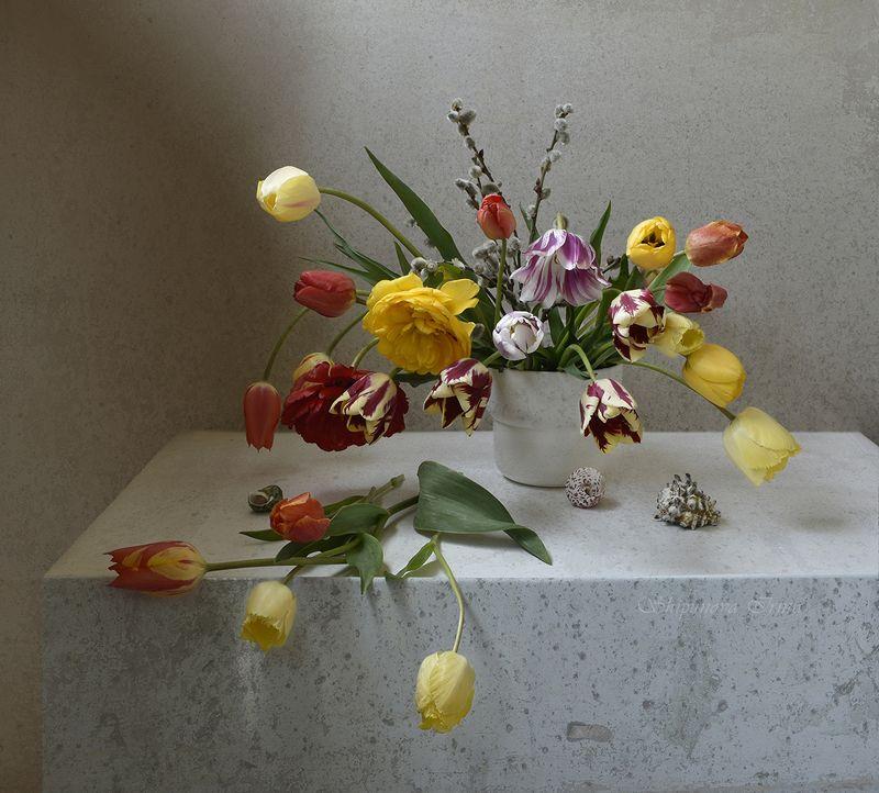 Тюльпановая рапсодия фото превью
