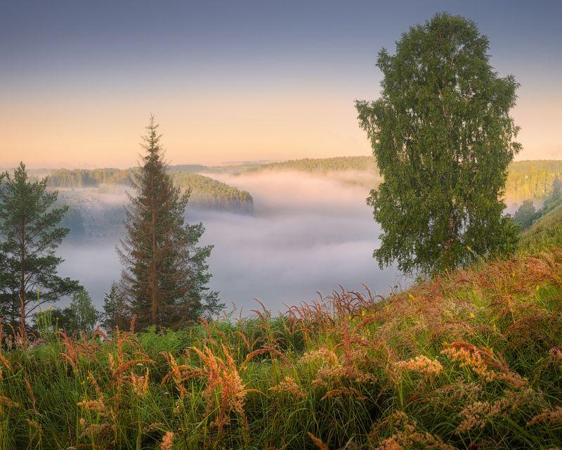 туман, река, лето, немда Над пологом туманаphoto preview