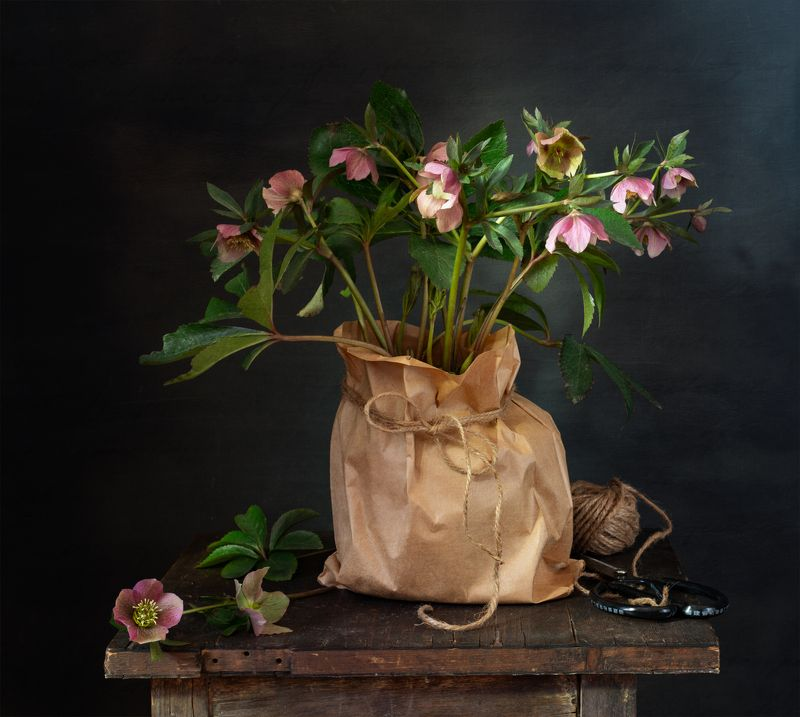 натюрморт, цветы, морозник Морозник цвететphoto preview