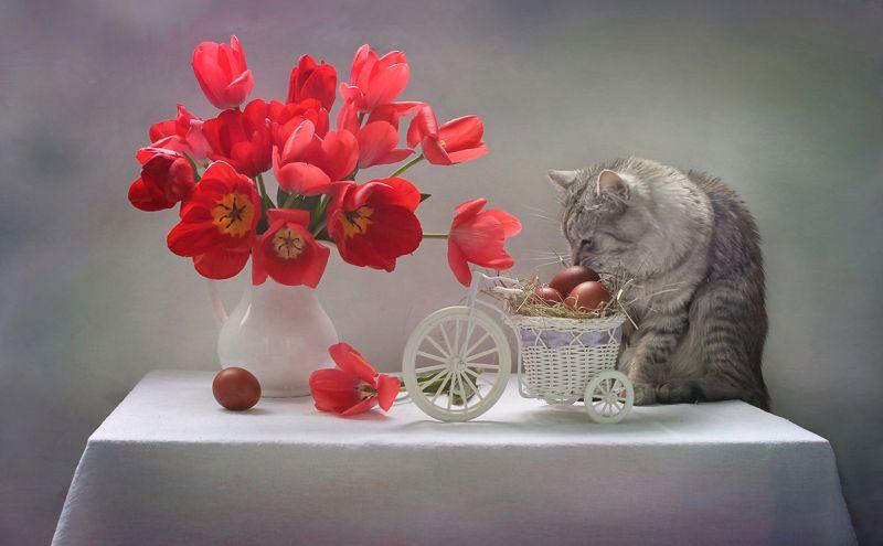 композиция, животные, кошки, кот, цветы, тюльпаны, весна, пасха, яйца Как Феня Пасху ждалphoto preview