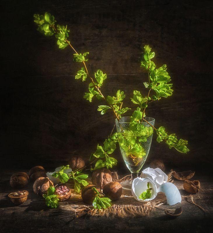 весна,грецкие орехи,скорлупа яиц,веточка,молодые листики,стопка,зарождение,нежность,зелень Зарождение весны !photo preview