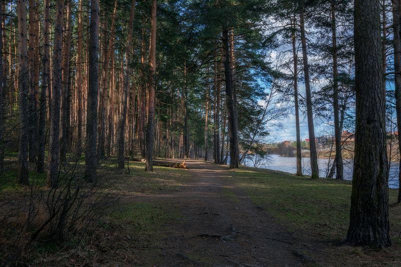Московская область, природа, пейзаж, весна, сосновый лес Апрельphoto preview