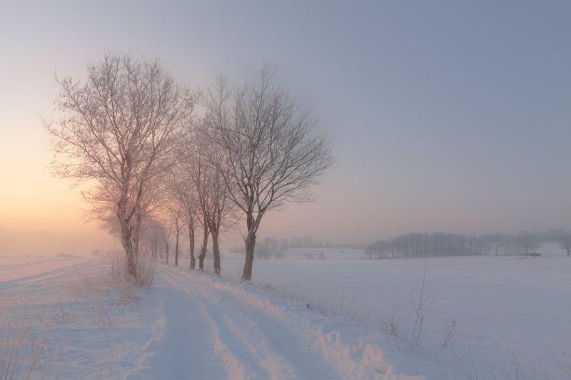 landscape,winter,canon,mountains Winter Road фото превью