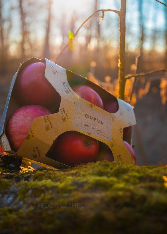 рассвет, яблоки, реклама, товар, упаковка, яблоко, солнце, природа, агроном сад, садоводство, хозяйство, освещение, рассветное, роса, Вкус рассветного солнцаphoto preview
