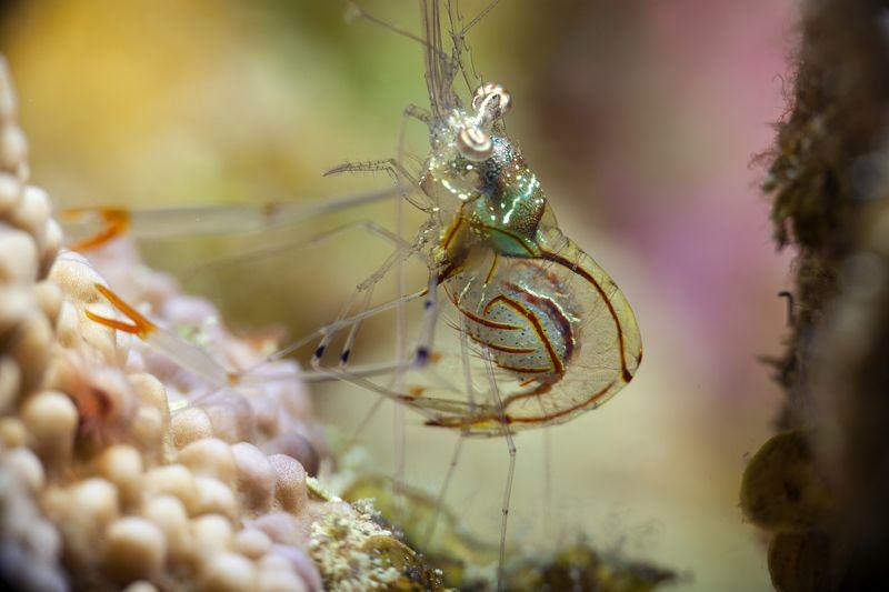 подводное фото подводный мир хургада египет жогло zhoglo красное море Скоро будет потомствоphoto preview