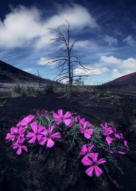 Мертвый лес фото превью