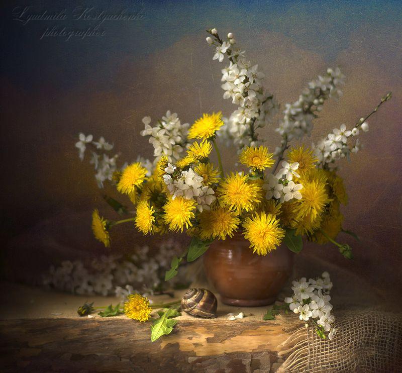 художественное фото,натюрморт,букет с цветами,одуванчики. Одуванчики с улиткой.photo preview