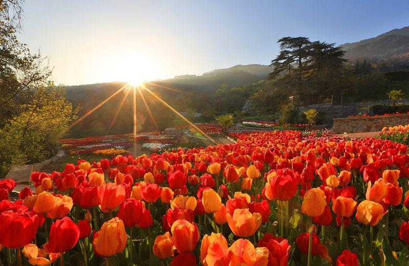 никитский сад, ялта, крым, никитский ботанический сад, ай-петри, выставка тюльпанов, тюльпаны, весна в ялте Парад Тюльпановphoto preview