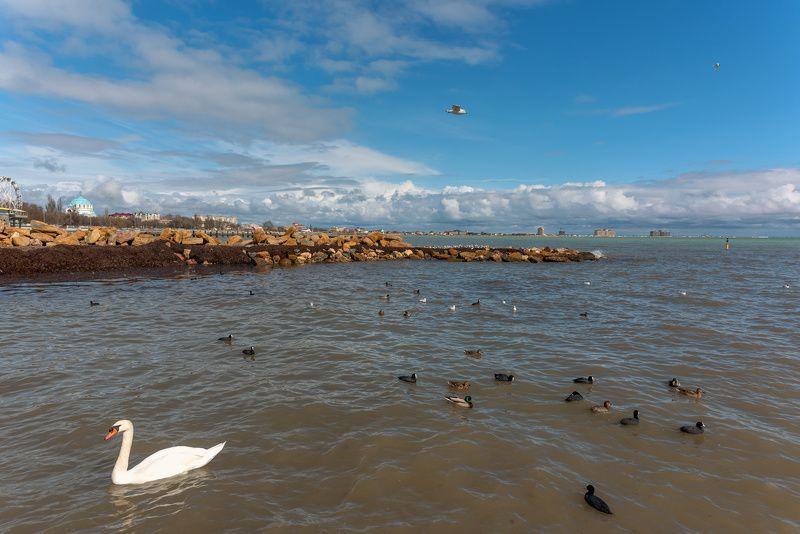 Море Черноеphoto preview