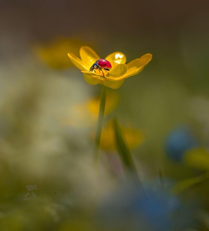 ставропольский край, цветы, природа, флора, хохлатка, цветок, первоцветы, в лесу, весна, насекомые, божья коровка, Божья коровкаphoto preview