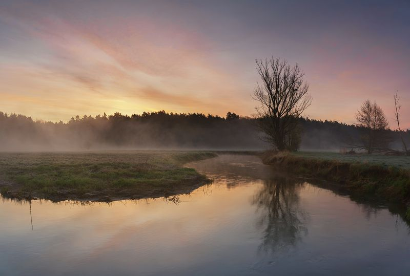 sunrise, river, tree, nature, landscape, morning, spring, sun, day Wierzyca riverphoto preview