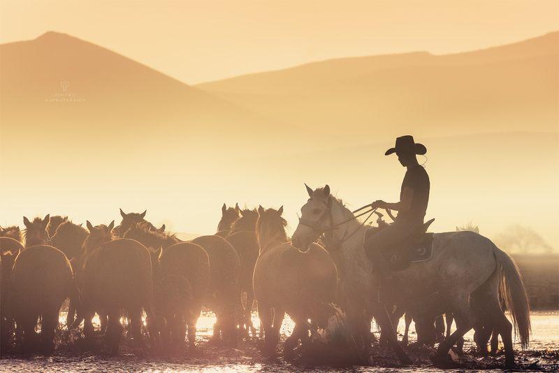 В стране лошадейphoto preview