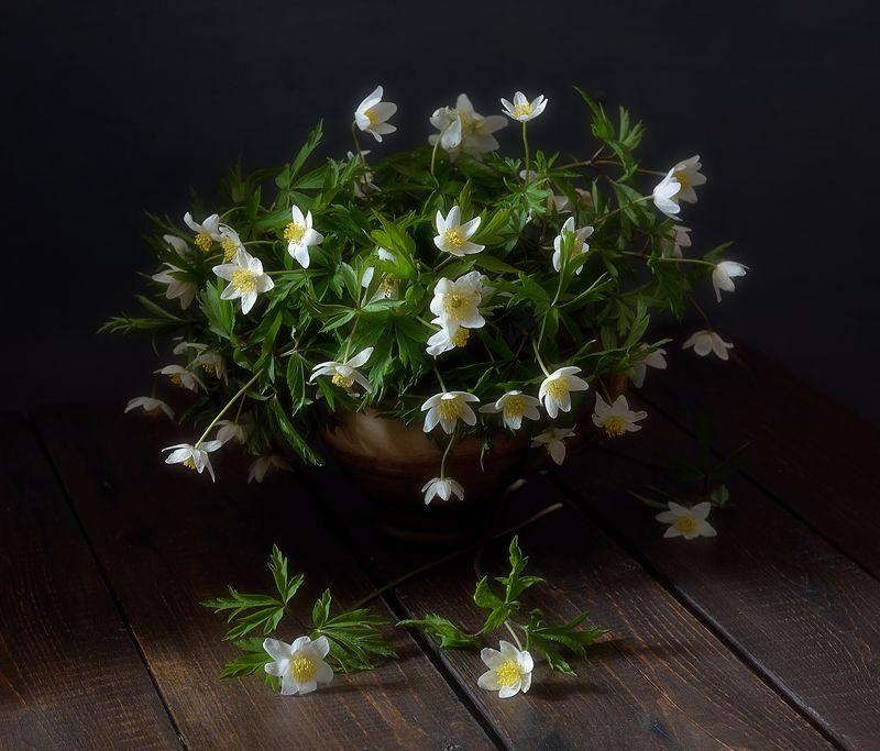 натюрморт,цветы,весна,анемоны,ветреницы ветреница зацвела...photo preview