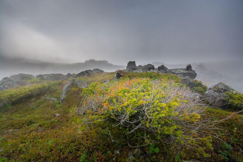 туман горы скалы урал лето утро Блуждая в туманеphoto preview