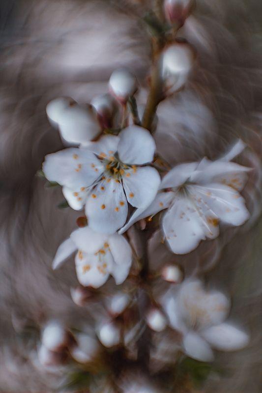 макро, весна, цветение Цветениеphoto preview