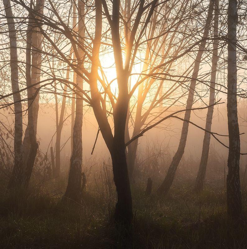 Майским утромphoto preview