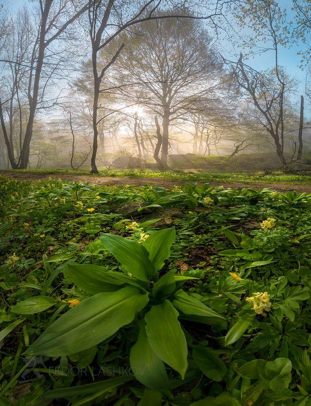 ставропольский край, ставрополье, весна, стрижамент, рассвет, солнце, лучи, туман, лесное, растение, растительность, хохлатка, дерево, эко тропа, туманный, Весеннее пробуждениеphoto preview