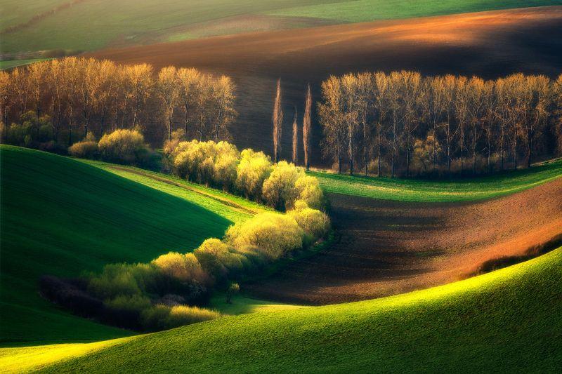 Lines of spring фото превью