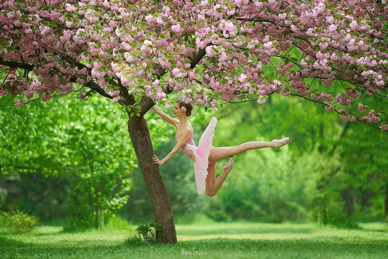 ballerina, dance, dancing, portrait, street, outdoor Японская вишняphoto preview