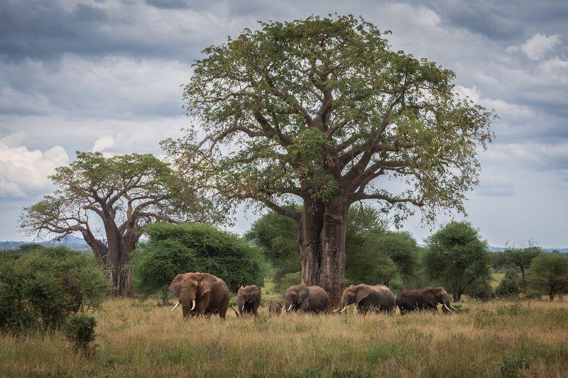 охраняя древо жизниphoto preview