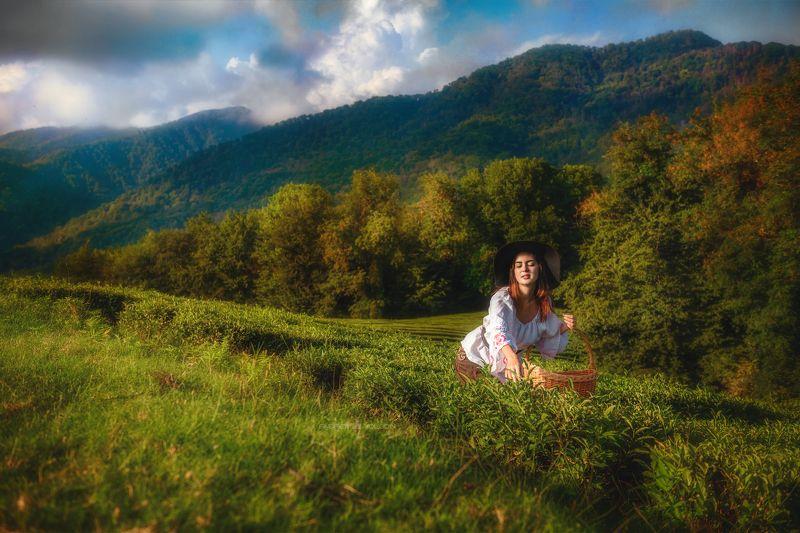 девушка чай корзина собирать плантации портрет поле лес природа Сборщица чаяphoto preview