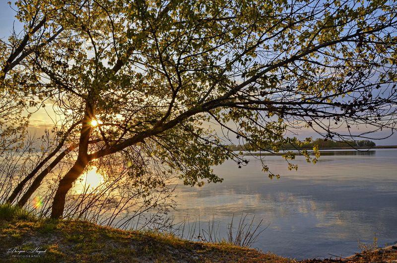 утро, май, рассвет, восход, небо, облака, отражение, тишина, первый листочки Утро Первомая фото превью