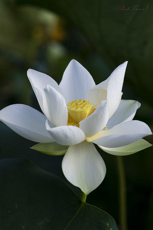#sellingphoto.#lotus. Lotusphoto preview
