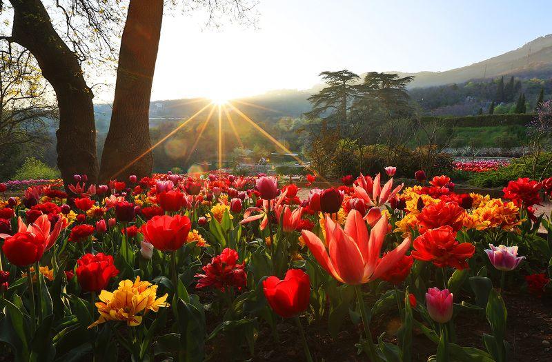 никитский сад, ялта, крым, никитский ботанический сад, ай-петри, выставка тюльпанов, тюльпаны, весна в ялте photo preview