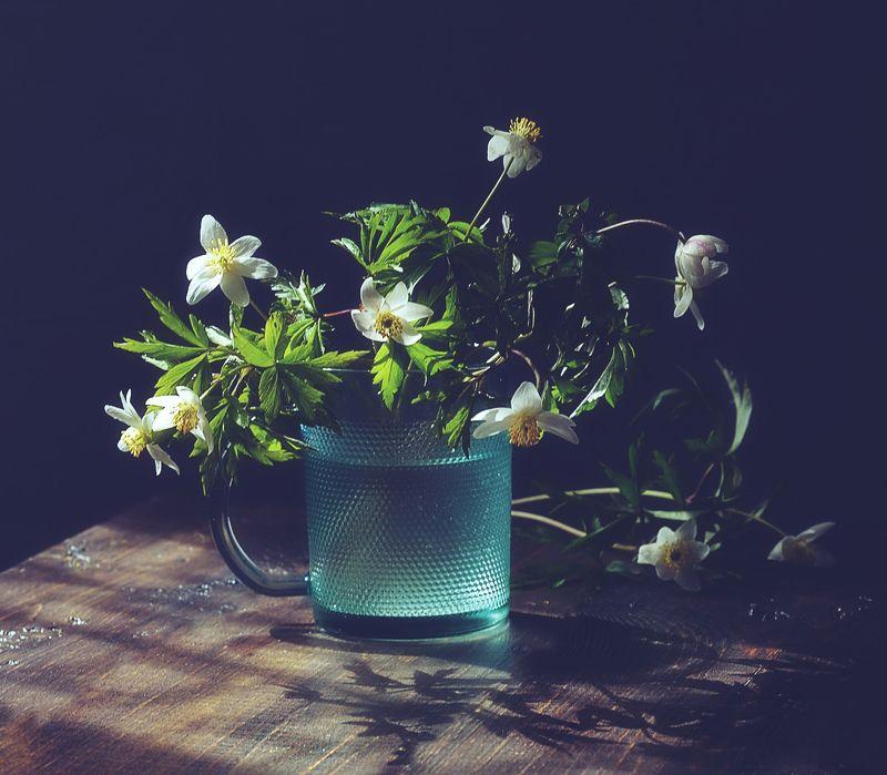 натюрморт,весна,цветы,ветреница,анемона ...photo preview