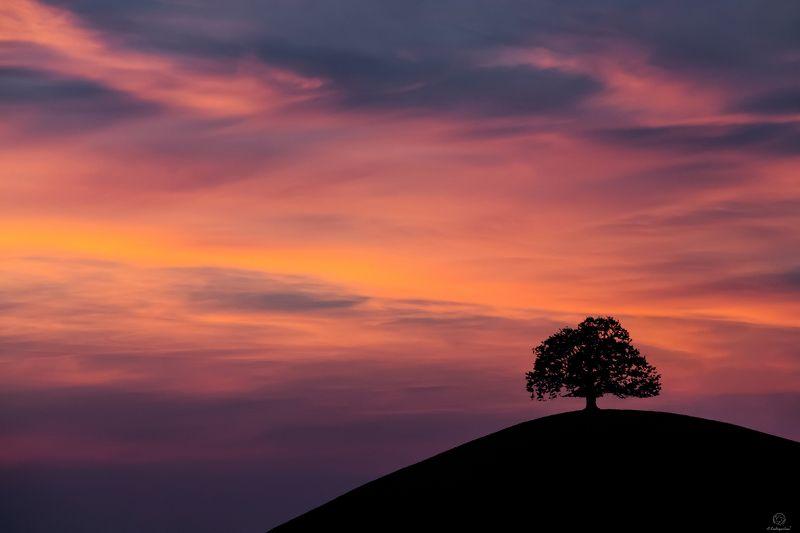 пейзаж, природа, закат, дерево, жизнь \