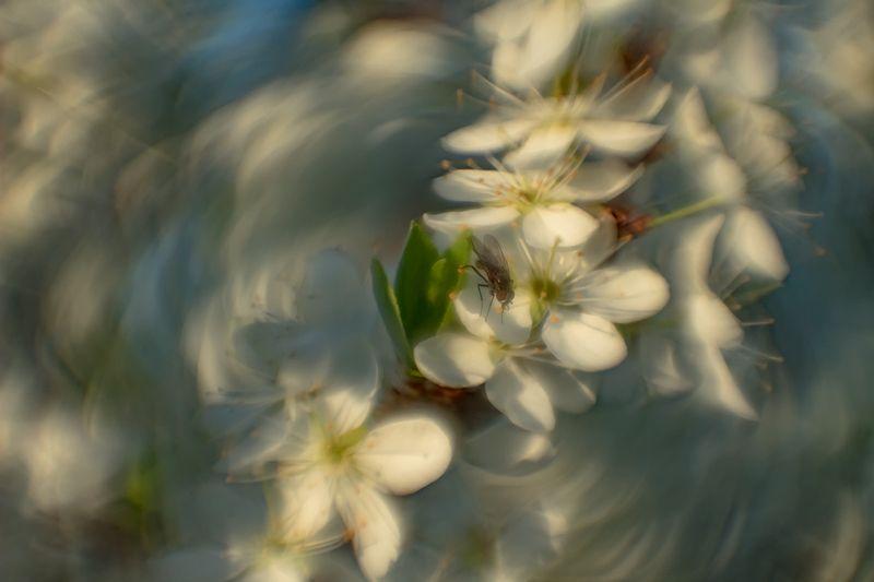 макро, весна, цветение photo preview