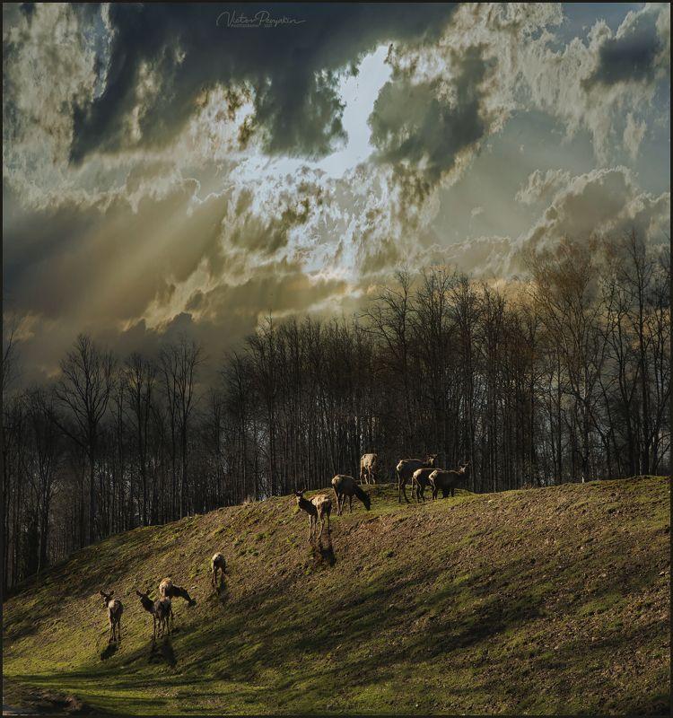 олени на закатеphoto preview