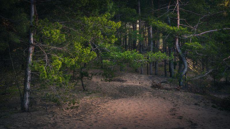 forest, dark, gloomy, landscape, desert, nature, morning Forestphoto preview