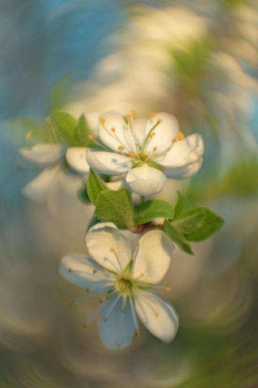макро, весна, цветение ***photo preview