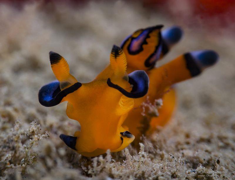 подводное фото подводный мир хургада египет жогло zhoglo красное море Покемонphoto preview