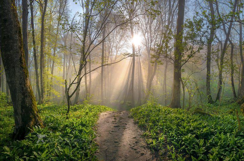 ставропольский край, ставрополье, весна, стрижамент, рассвет, солнце, лучи, туман, лесное, растительность, хохлатка, дерево, эко тропа, туманный, Туманный лес на Стрижаментеphoto preview