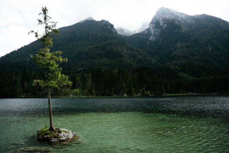 озеро; дерево; горы Одинок, но не сломленphoto preview