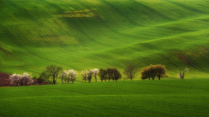 sunset, spring, landscapes, tree, Moravian wavesphoto preview