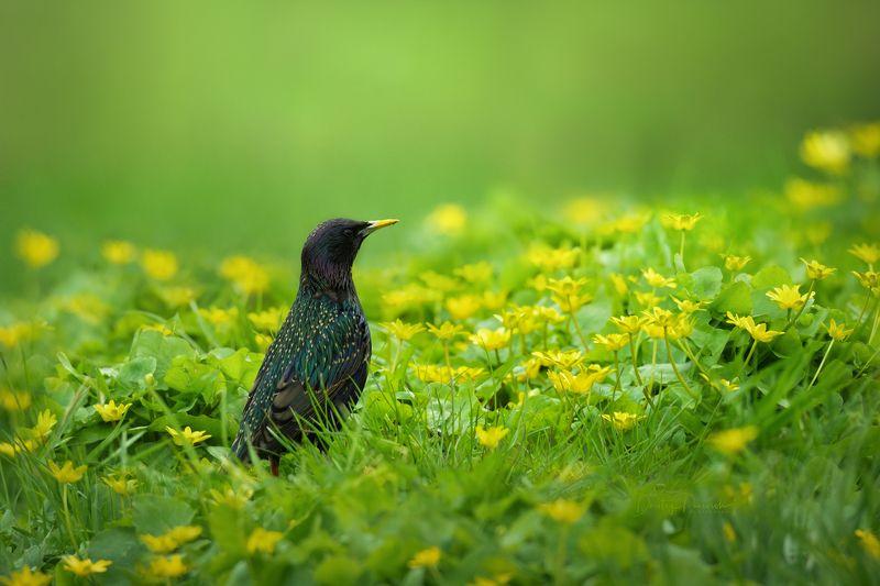 природа, лес, поля, огороды, животные, птицы, макро Рассвет весныphoto preview