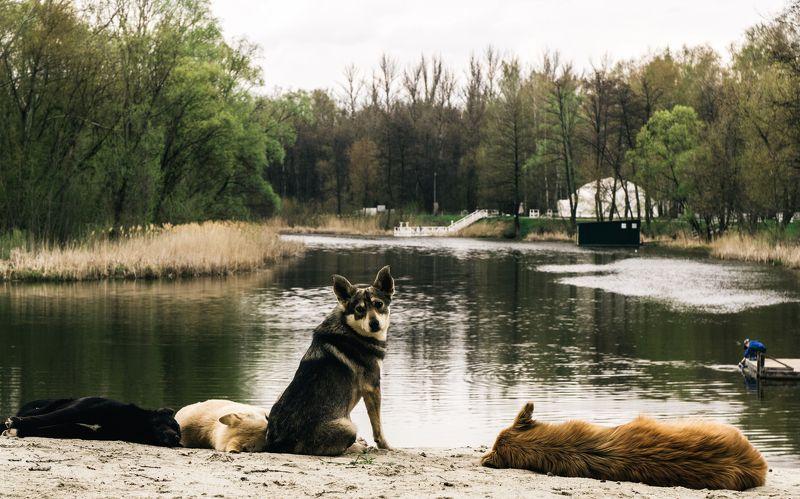 Собакаphoto preview