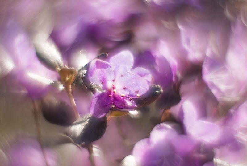 Весна на берегах Катуниphoto preview
