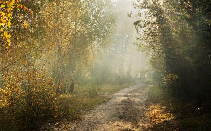 лес, осень, октябрь, утро, туман, рассвет Растворяясь в утренней негеphoto preview