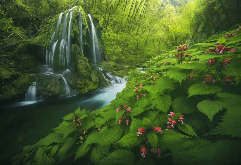 #landscape #mountains #italy #forest #waterfall Spring explosion фото превью