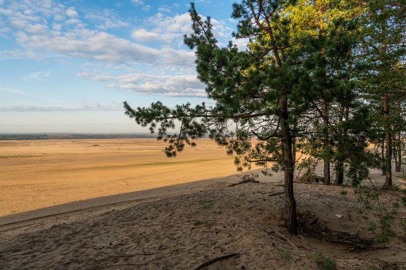 nature, landscape, colors, sunrise, tree, desert, sand Błędowska desertphoto preview