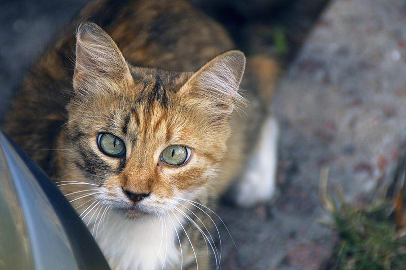 коты, бездомные коты, животные сами по себе...photo preview